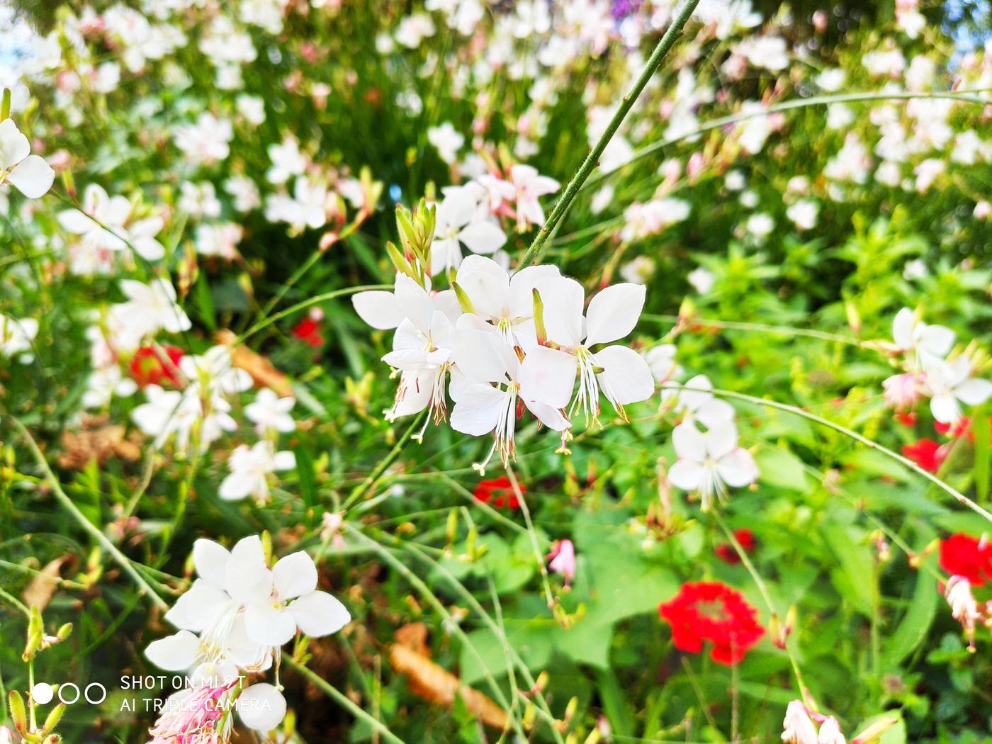 Photo Xiaomi Mi 9t